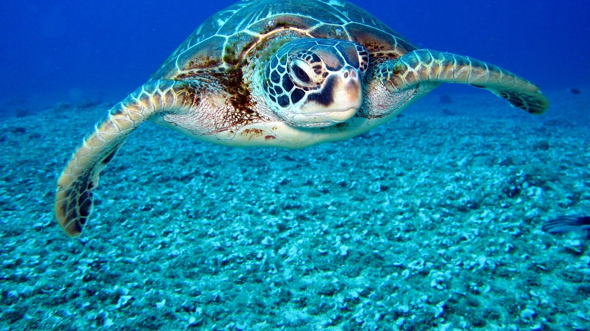 Points To Learn About Sea Turtles – Sea Conservancy