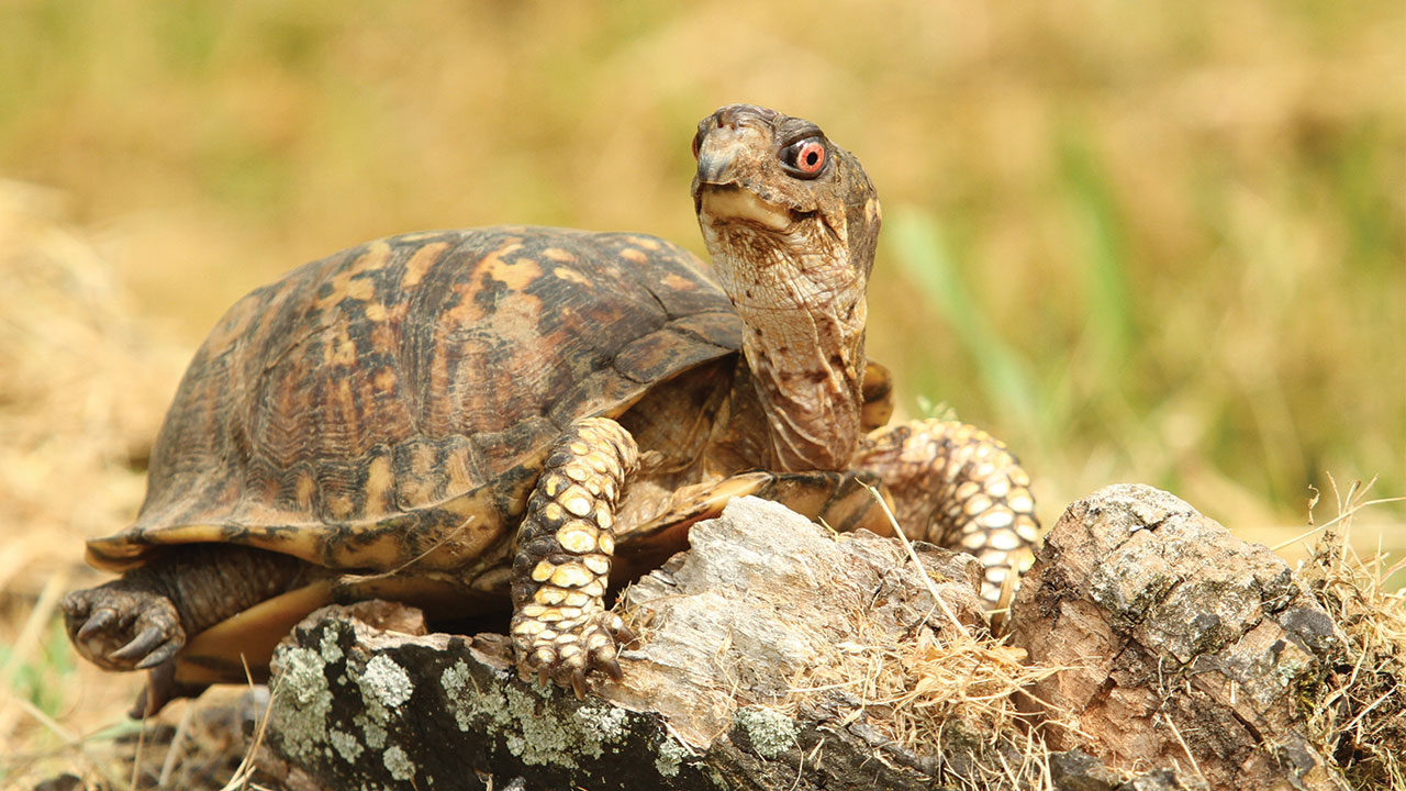 Desire A Thriving Business Prevent Baby Box Turtle